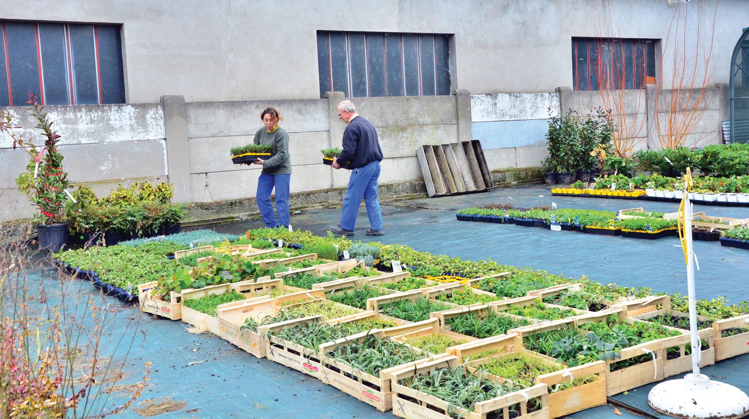 Centre de production horticole jardin en hiver for Entretien jardin 77